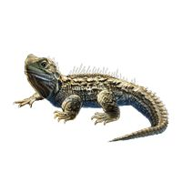 Image result for free images of tuatara