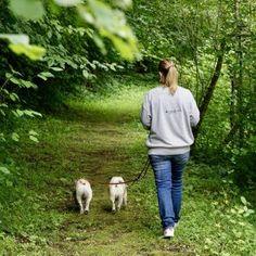 Urlaub mit Hund im Pielachtal im Hotel Steinschalerhof, NÖ   Hundereise Regional, Hiking, Pet Dogs, Viajes