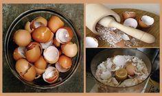 Casca de ovo tem muitas utilidades - depois de conhecer, você não vai jogá-la mais no lixo! | Cura pela Natureza