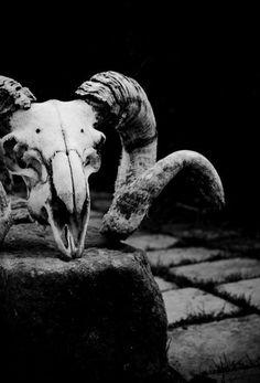 Cervena Fox Alt Model #Skull