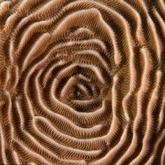Macro Zoom of Coral