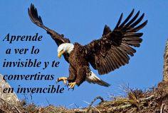 Aguilas+Con+Frases+De+Superacion+Muy+Chidas(4).jpg (550×373)
