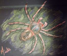 How to draw: A Spider Drawing Lessons, Animal Drawings, Spider, Arts And Crafts, Pretty, Artist, Blog, Painting, Animals