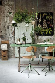 HOME & GARDEN: Mes coups de coeur Tumblr #6. Belle sedie vintage, splendide piante. Verde salvia. Cassette in legno