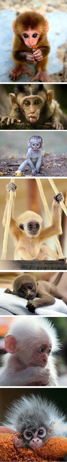 All baby animals are generally adorable, but some seem to be extra cute — like, for instance, baby monkeys.