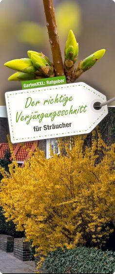 56 besten How to - Gardening Bilder auf Pinterest | Garten pflanzen ...