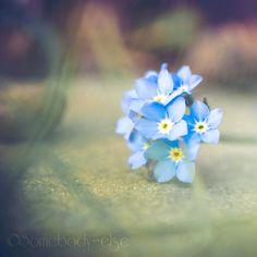 Little blue by Somebody--else.deviantart.com on @DeviantArt
