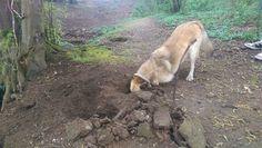 Roco buddelt ein Loch