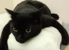 I have a weakness for black cats.