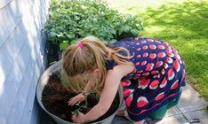 At have børn med i haven og lære dem om fra jord til bord, er rigtig gode værdier og super hyggeligt! De spiser også meget nemmere ting de selv har været me