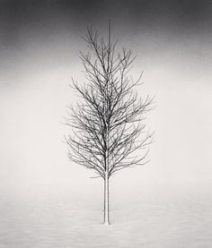 The Master of Landscape Photography: Michael Kenna — Photography Office Wallpaper Minimalista, Wald Tattoo, Photography Office, Tree Tattoo Designs, Black And White Landscape, Black White, Nature Tattoos, Tree Tattoos, Nature Tree