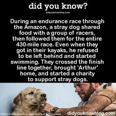 During an endurance race through the Amazon, a stray dog shared food with a group of racers, then followed them for the entire 430-mile race. Even when they got in their kayaks, he refused to be left behind and started swimming. They crossed the finish line together, brought 'Arthur' home, and started a charity to support stray dogs.  Source