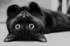 ♥ upside down kitty