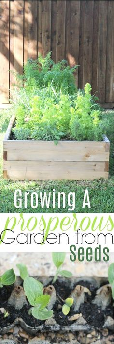 tips for growing a vegetable garden from seeds, how to have a high yield veggie garden, how to garden