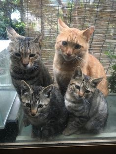 Stray cat brought her family. Click here for more adorable animal pics!