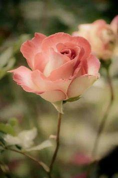 e grattiskort Blomma grattiskort   e kort animerade blommor | Róże | Pinterest  e grattiskort