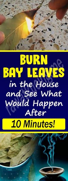 Burn Bay Leaves in the House and See What Would Happen After 10 Minutes! – Holistic Health Care and Wellness Muscle Nutrition, Health Diet, Health And Nutrition, Health And Wellness, Health Fitness, Fitness Diet, Health Care, Health Goals, Nutrition Tips