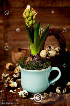 Not only is it a great photo but an interesting project. growing spring flower in a cup by Natalia Klenova on