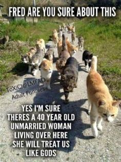 Funny Cat Memes Of The Day – 43 Pics – Lovely Animals Worl… Chat Drôle Memes Du Jour – 43 Photos – Monde des beaux animaux Funny Animal Memes, Funny Animal Pictures, Cute Funny Animals, Funny Cute, Cute Cats, Funny Memes, Funny Pics, Funny Kitties, Funniest Animals