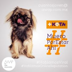 """Yo no soy feo, es que me +kotearon""  Idea creativa @davichobandazza Copy's @reneanzorena @tahusin @davichobandazza Artes @reneanzorena Agencia: awap.com.mx  #maskota #maskotastore #maskotamaltrataanimales #maskotamata  #HablamosDigital #HablamosViral #HablamosDiseño #HablamosCliente  #creative #true #awappers #digitalmarketing #digitalagency #mexico #df #designPorn #AWAP #html #css #responsivo #OnlineReputation #marketingdigital #agenciadigital"