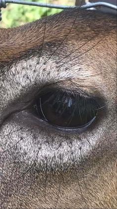 Deer Photos, Deer Pictures, Photos Of Eyes, Deer Mount Decor, Deer Eyes, Taxidermy Display, Deer Mounts, Roe Deer, Eye Painting