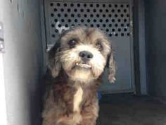 7/31/15 SAFE ADOPTED/RESCUED Thrilled to know Zorro is safe and outta there. Wish we knew whether it was adopted or rescued... I'm betting Adopted!!7/26/15 URGENT A4857616 Zorro approx 10YO male not neutered. Sharing this little precious sad sac who sits whmpering in his kennel Zorro is in his prime with many more years of love to give that one person who can save him! At Downey ACC since 7/20/15 avail 7/24 on July 24, 2015  visit me at my temp home at D624