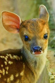 What a cutie! #Cute #Animals