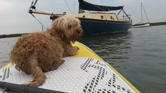 Paddle Boarding in Burnham Overy Staithe with North Norfolk Paddle Boards & Betty the Cockapoo