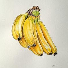 Banana Bunch - artwork by Pip Boydell