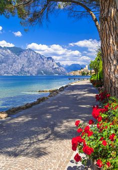 Lake Garda region, Italy. Pictured here is Malcesine which is a beautiful town at the bottom of Mont Baldo. Take the cable car up the 1800 ft. for incredible views.