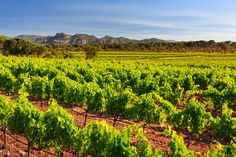 Château du Rouët-Photo Gallery of Rouët vineyard in the heart of Provence