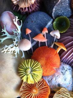 Mushroom Medley Photo #6 by Jill Bliss
