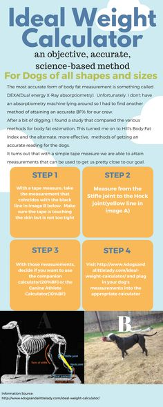 A huge majority of dogs in the US are overweight. Part of that is not having a reliable method for gauging fitness. We change that with our Ideal Weight Calculator.