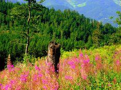 https://flic.kr/p/ycMMk   Blumen im Schwarzwald   Schwarzwald im Sommer   La…