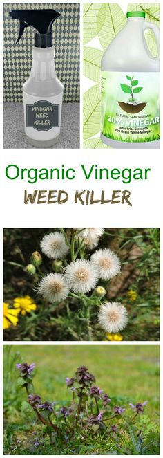 This vinegar weed killer uses organic or horticultural vinegar to kill weeds without the use of salt, which can be damaging to the soil.