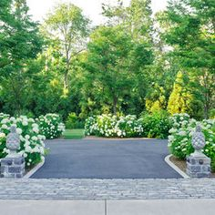 Driveway lined with Annabelle hydrangeas and pineapple posts