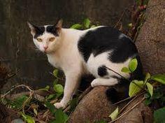 """Résultat de recherche d'images pour """"chat de gouttière"""""""