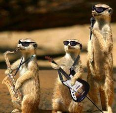 #69 pjevati s prijateljima