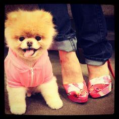 Gund 'Boo - World's Cutest Dog' Stuffed Animal Plush Animals, Cute Animals, Cute Puppies, Cute Dogs, Boo And Buddy, World Cutest Dog, Nordstrom, Adidas, Christian Louboutin Shoes