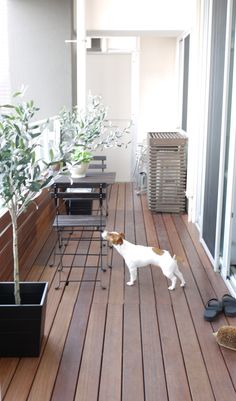 Comfortable life with dog Small Balcony Design, Small Balcony Garden, Small Terrace, Porch And Balcony, Outdoor Balcony, Balcony Gardening, Balcony Ideas, Cosy Apartment, Apartment Balcony Decorating