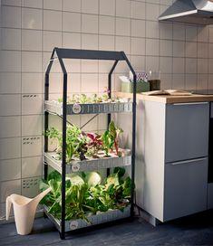 Kweekbak met licht, groente verbouwen in huis zonder potgrond - Ikea