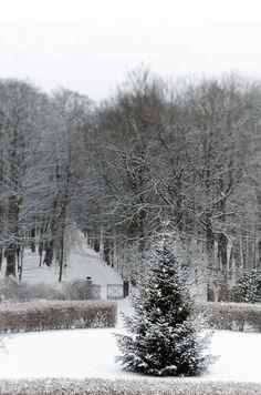 Alles wat je nog niet wist over de kerstboom! - ThePerfectYou.nl