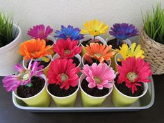 dirt cake in individual cups with a flower to decorate