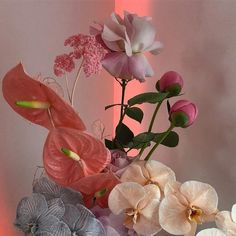 Orchids Aesthetic Peonies – Famous Last Words Flower Aesthetic, Pink Aesthetic, My Flower, Beautiful Flowers, Foto Fantasy, Plants Are Friends, No Rain, Mother Nature, Peonies