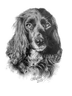 This pencil portrait of a cocker spaniel called Layla was commissioned for a Christmas present. Who wouldn't want some original art of their pet?
