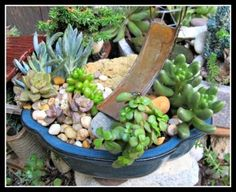 Succulents in Bonsai Dish and Slide