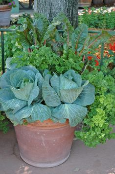 container vegetable gardening | Container vegetable garden