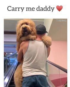Biggie too tired to walk 😌 - Tiere - Animal Jokes, Funny Animal Memes, Dog Memes, Funny Animal Pictures, Memes Humor, Funny Jokes, Cute Funny Dogs, Cute Funny Animals, Cute Baby Animals