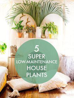 5 Super Low-Maintenance House Plants /