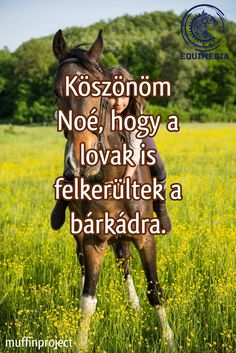 Equestrian Quotes, Most Beautiful Horses, Horse Love, My Dream, Cupcake Cakes, Funny Jokes, Humor, Cute, Pictures
